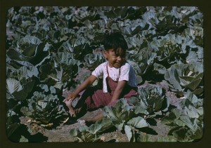 Child of a migratory farm laborer, cabbage crop, Texas, 1942